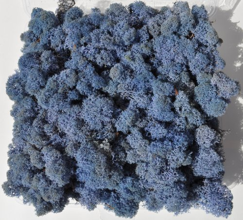 Reindeer Moss, Preserved – Lavender Blue, 20-Ounce (1.25 Pounds) in a Designer Series Clear Case. (Reico Art 108085 – Soft and Colored Reindeer Moss)