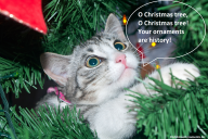 O Christmas Tree Cat & Ornaments Funny Meme